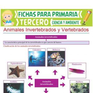 Ficha de Animales Invertebrados y Vertebrados para Tercer Grado de Primaria