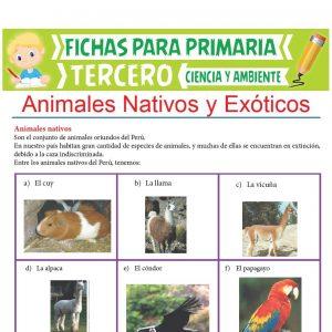 Ficha de Animales Nativos y Exóticos para Tercer Grado de Primaria