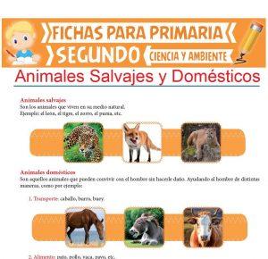 Ficha de Animales Salvajes y Domésticos para Segundo de Primaria