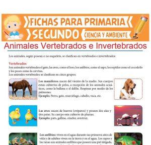 Ficha de Animales Vertebrados e Invertebrados para Segundo de Primaria