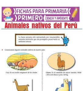 Ficha de Animales Nativos del Perú para Primero de Primaria