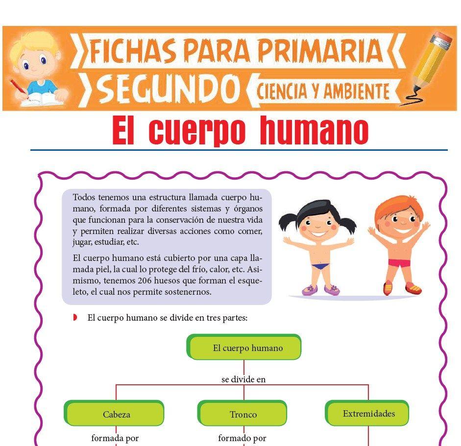 Cuerpo Humano Para Segundo De Primaria Actividades Educativas
