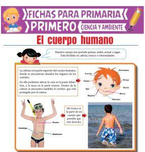 Ficha de El Cuerpo Humano para Primero de Primaria