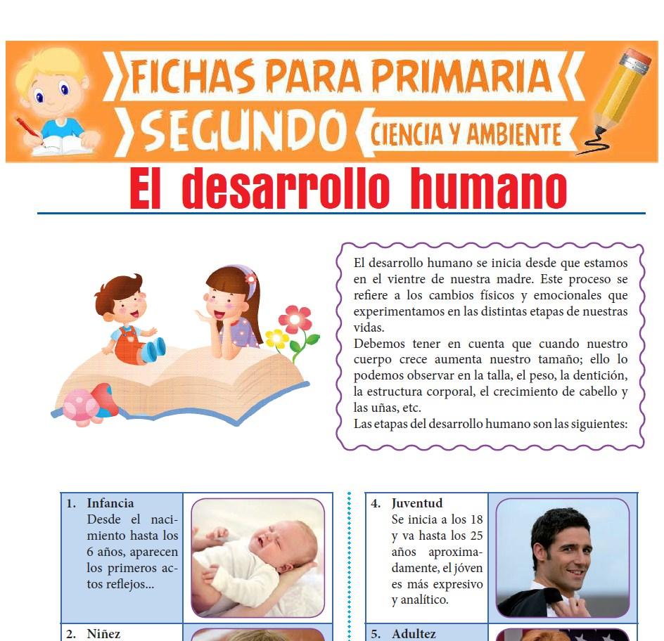Ficha de El Desarrollo Humano para Segundo de Primaria