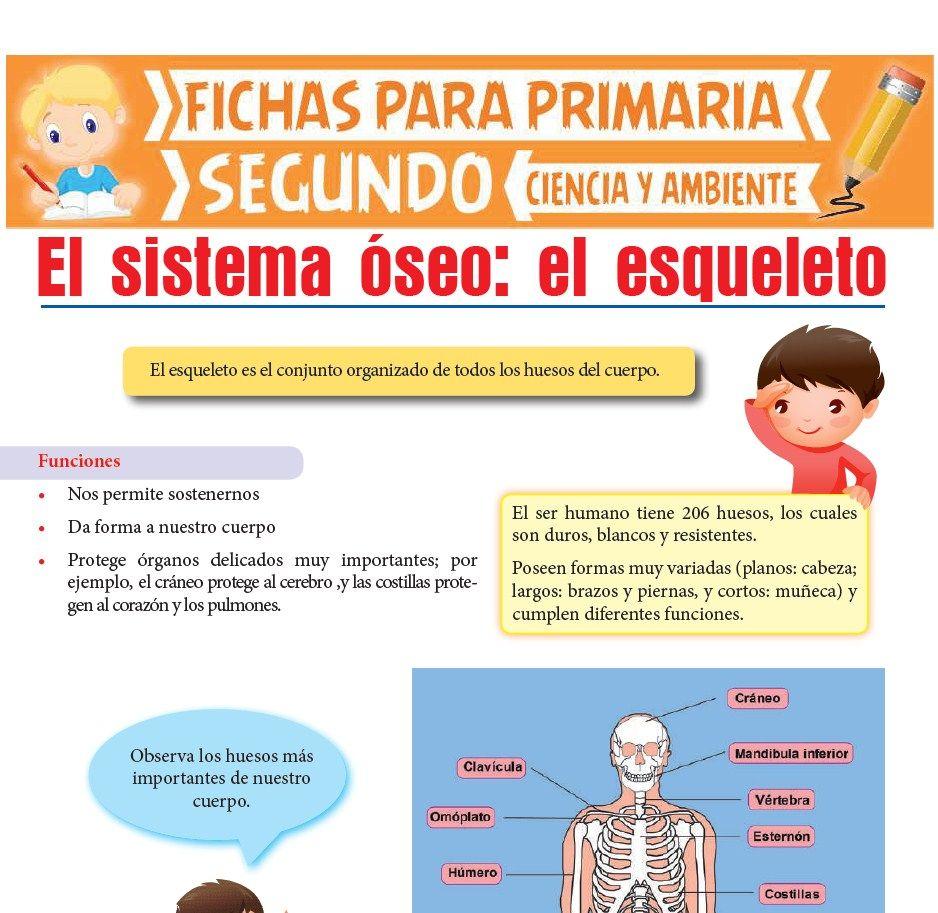 Ficha de El Esqueleto Humano para Segundo de Primaria