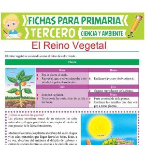 Ficha de El Reino Vegetal para Tercer Grado de Primaria