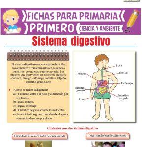Ficha de El Sistema Digestivo para Primero de Primaria