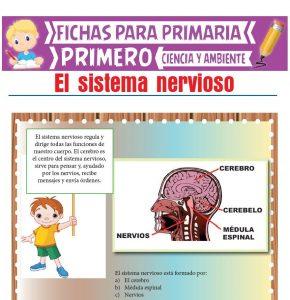 Ficha de El Sistema Nervioso para Primero de Primaria