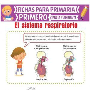 Ficha de El Sistema Respiratorio para Primero de Primaria