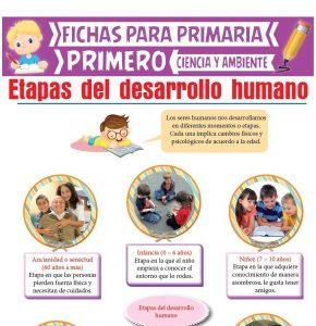 Ficha de Etapas del Desarrollo Humano para Primero de Primaria