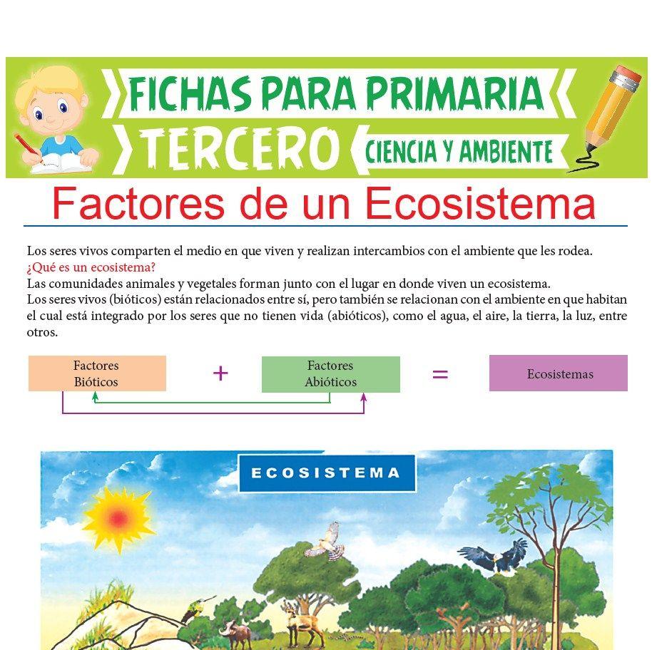 Ficha de Factores de un Ecosistema para Tercer Grado de Primaria