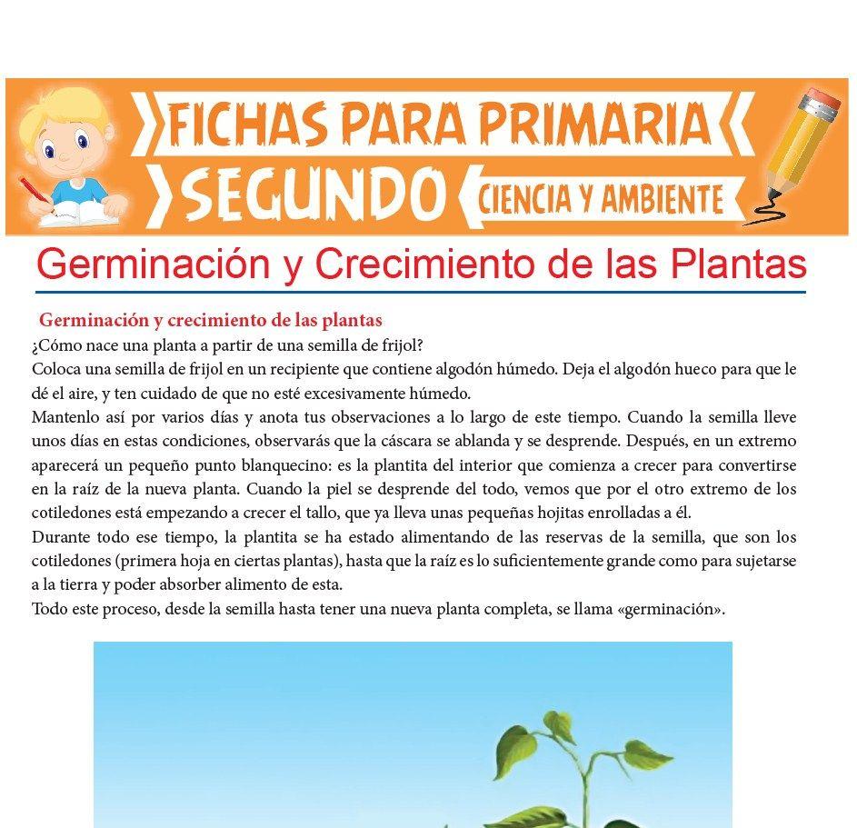 Ficha de Germinación y Crecimiento de las Plantas para Segundo de Primaria