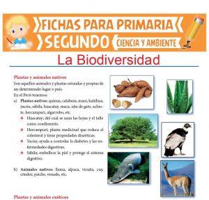 Ficha de La Biodiversidad para Segundo de Primaria