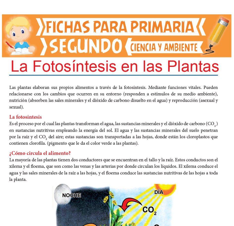 Ficha de La Fotosíntesis en las Plantas para Segundo de Primaria