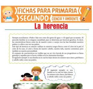 Ficha de La Herencia para Segundo de Primaria
