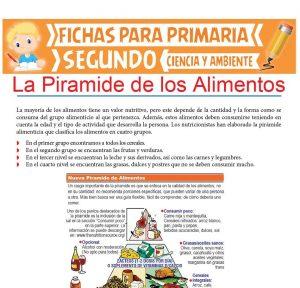Ficha de La Pirámide de los Alimentos para Segundo de Primaria