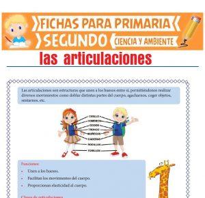Ficha de Las Articulaciones del Cuerpo para Segundo de Primaria