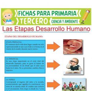 Ficha de Las Etapas Desarrollo Humano para Tercer Grado de Primaria