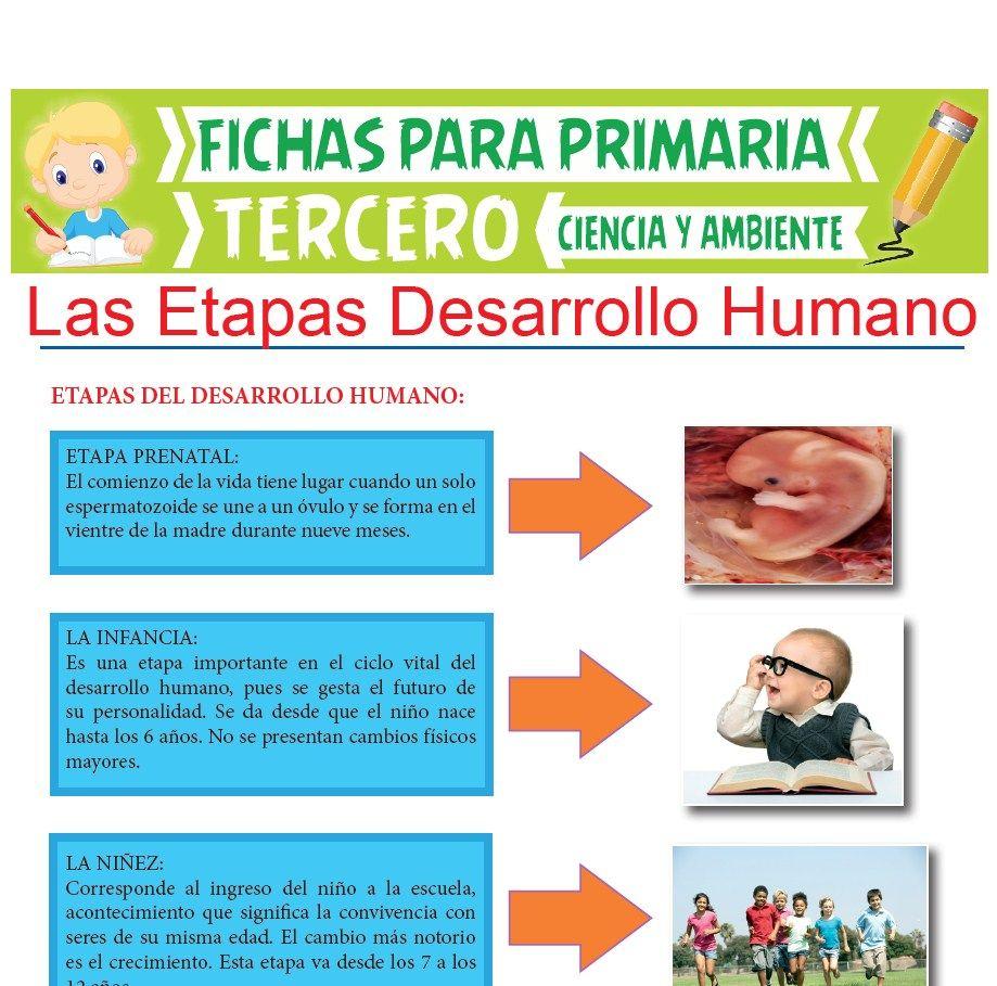 Las Etapas Desarrollo Humano Para Tercer Grado De Primaria