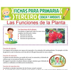 Ficha de Las Funciones de la Planta para Tercer Grado de Primaria