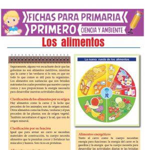Ficha de Los Alimentos para Primero de Primaria