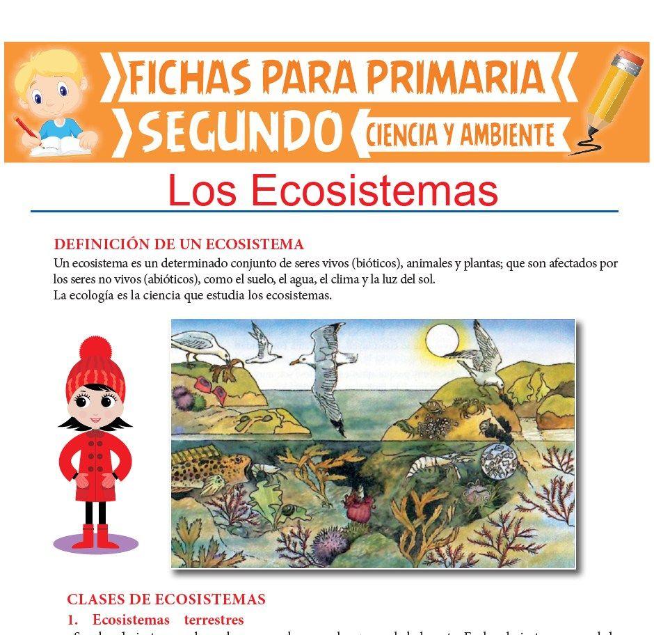Los Ecosistemas Para Segundo De Primaria Actividades