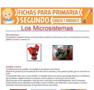 Ficha de Los Microsistemas para Segundo de Primaria