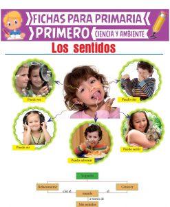 Ficha de Los Sentidos para Primero de Primaria