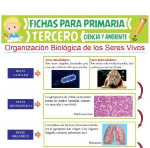 Ficha de Organización Biológica de los Seres Vivos para Tercer Grado de Primaria