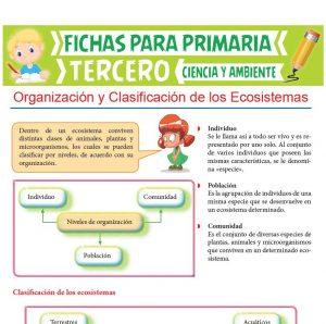 Ficha de Organización y clasificación de los Ecosistemas para Tercer Grado de Primaria