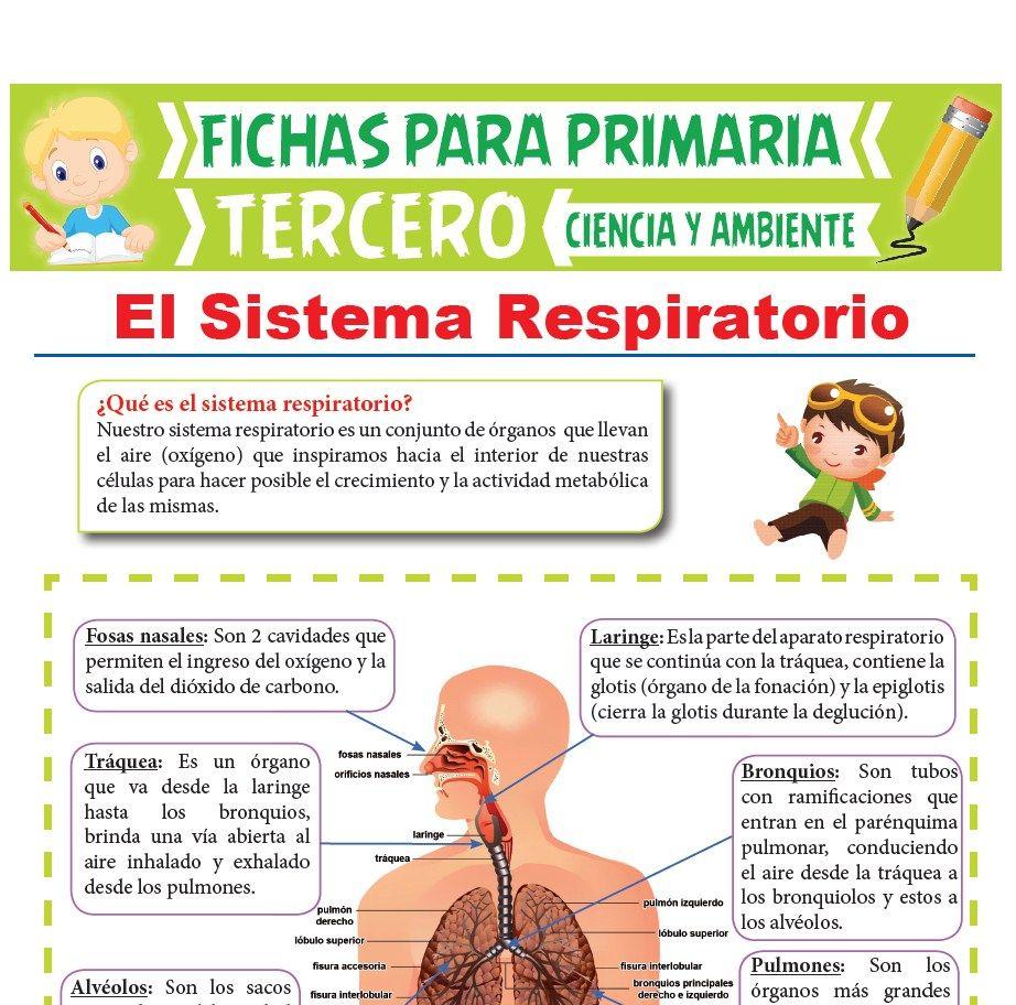 Partes del Sistema Respiratorio para Tercer Grado de Primaria