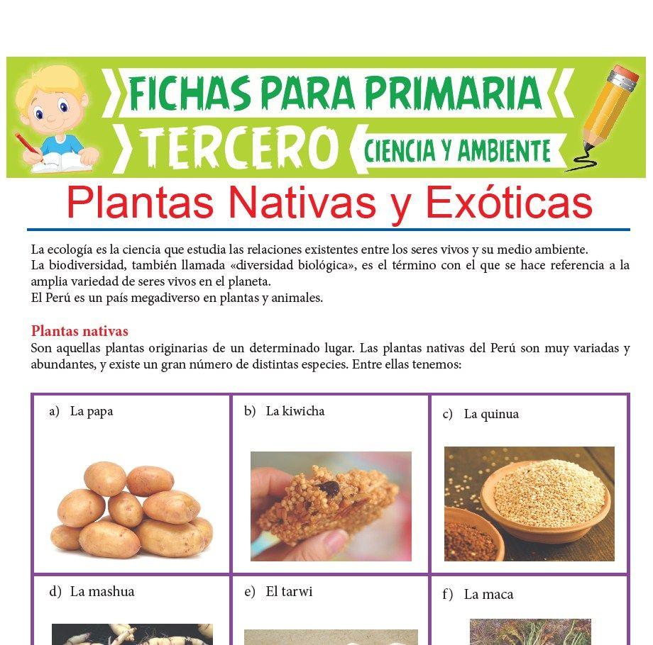 Ficha de Plantas Nativas y Exóticas para Tercer Grado de Primaria
