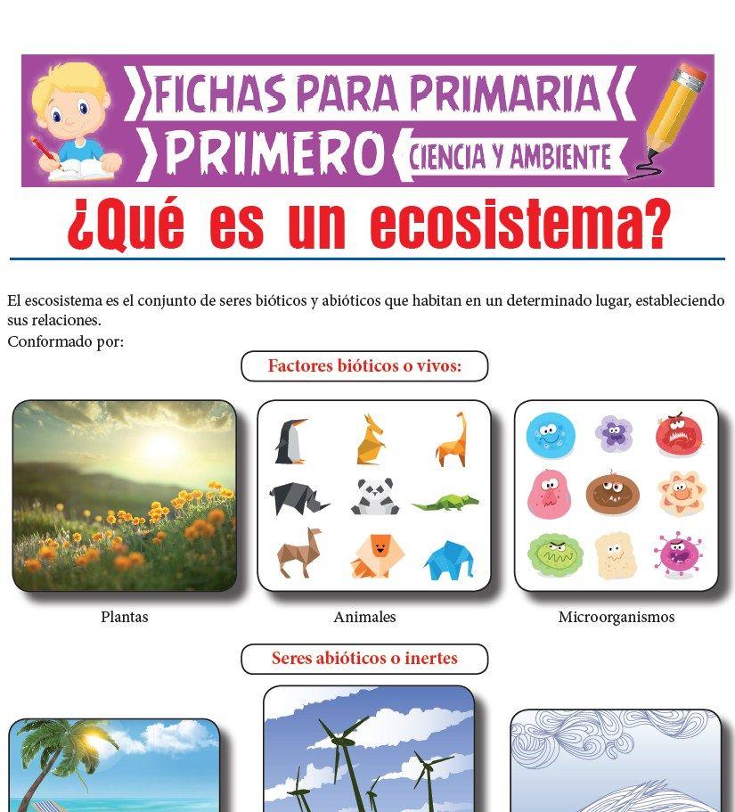 Ficha de Que es un Ecosistema para Primero de Primaria