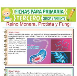 Ficha de Reino Monera, Protista y Fungi para Tercer Grado de Primaria