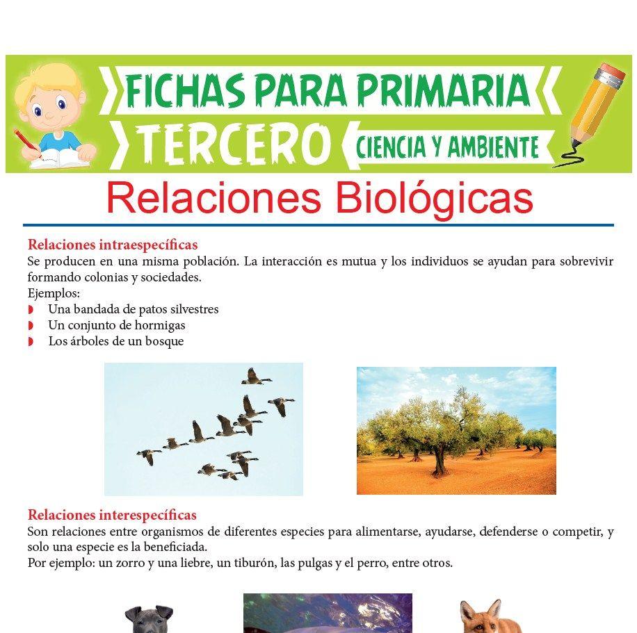 Ficha de Relaciones Biológicas para Tercer Grado de Primaria
