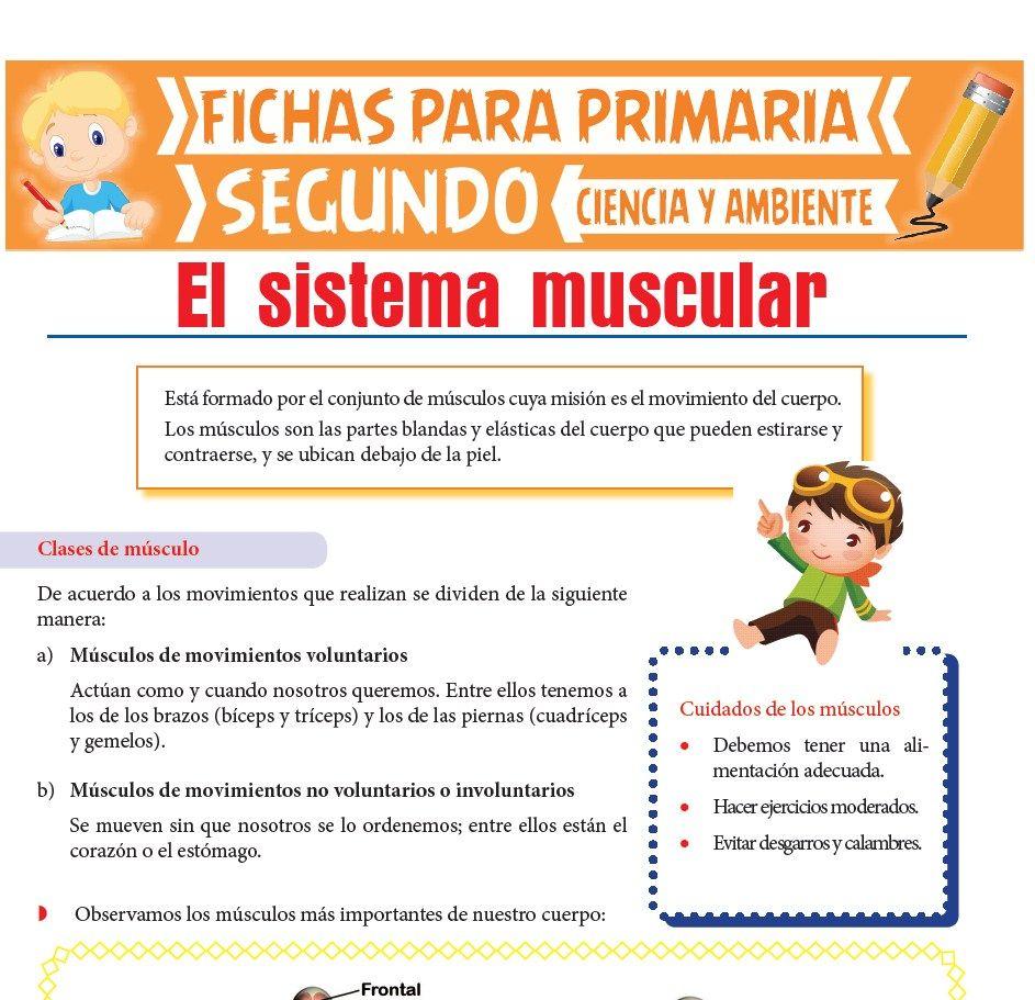 Ficha de Sistema Muscular para Segundo de Primaria
