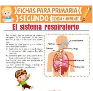 Ficha de Sistema Respiratorio para Segundo de Primaria