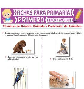 Ficha de Técnicas de crianza, cuidado y protección de animales para Primero de Primaria