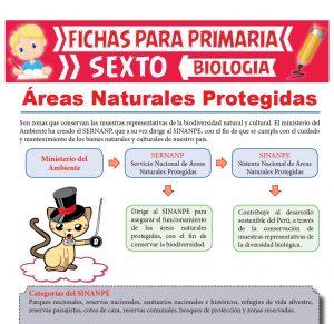 Ficha de Áreas Naturales Protegidas para Sexto Grado de Primaria