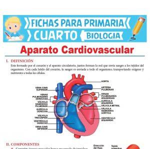 Ficha de Aparato Cardiovascular para Cuarto Grado de Primaria