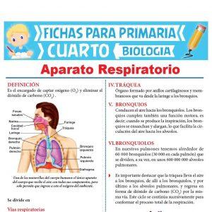 Aparato Respiratorio para Cuarto de Primaria