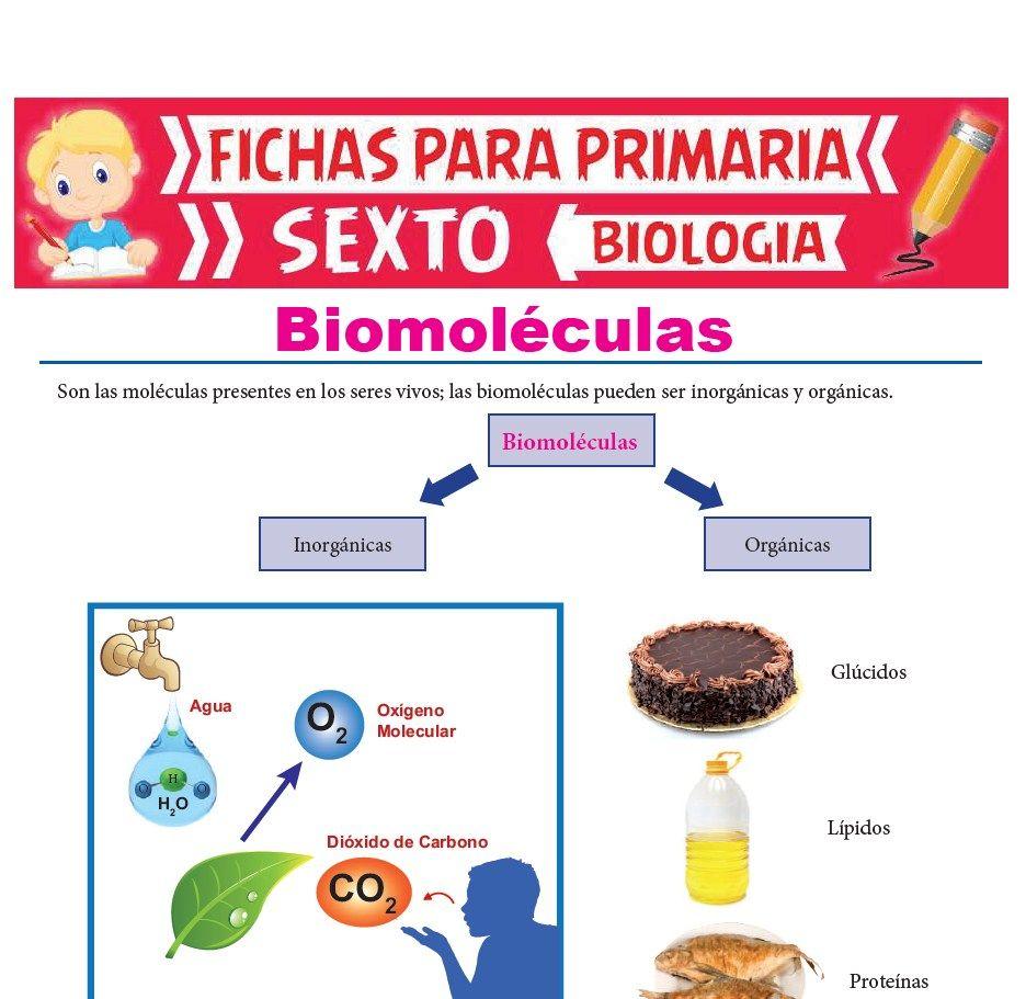 Ficha de Biomoléculas para Sexto Grado de Primaria