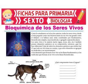 Ficha de Bioquímica de los Seres Vivos para Sexto Grado de Primaria