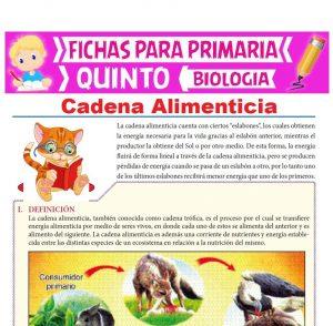 Ficha de Cadena Alimenticia para Quinto Grado de Primaria