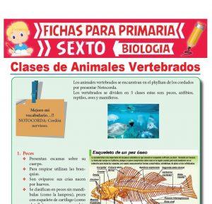 Ficha de Clases de Animales Vertebrados para Sexto Grado de Primaria