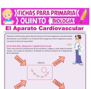 Ficha de El Aparato Cardiovascular para Quinto Grado de Primaria