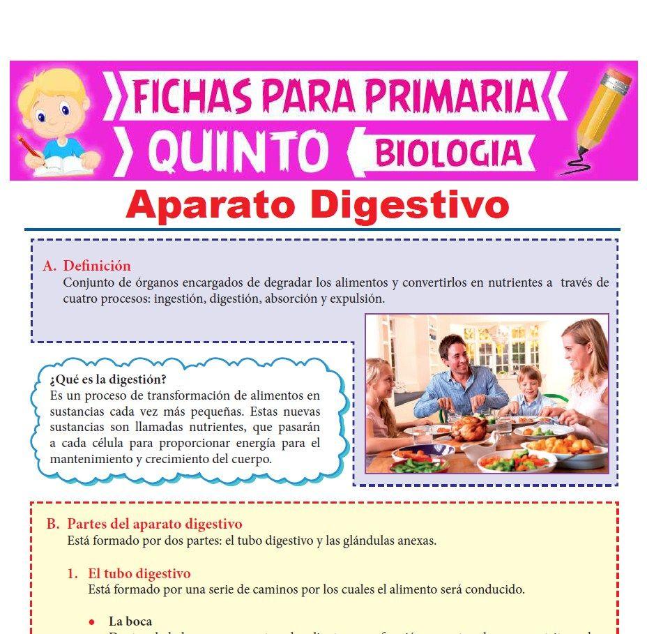 Ficha de El Aparato Digestivo para Quinto Grado de Primaria