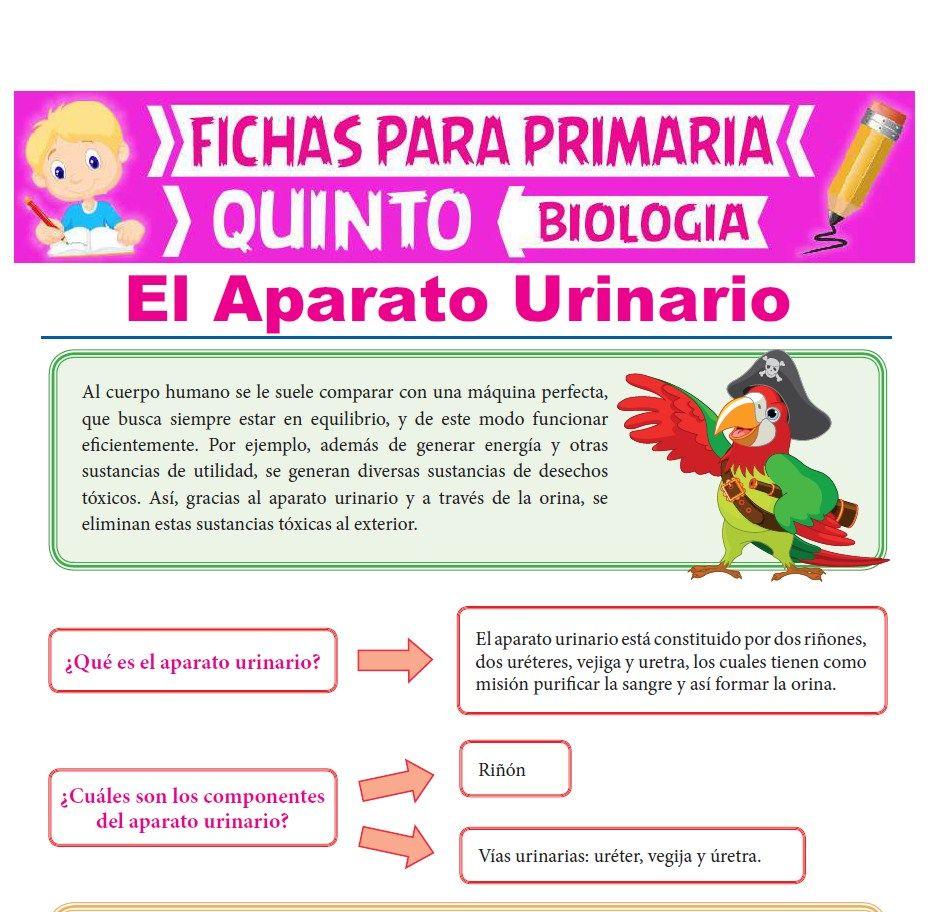 Ficha de El Aparato Urinario para Quinto Grado de Primaria
