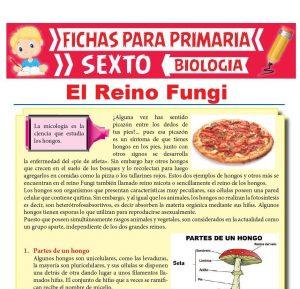 Ficha de El Reino Fungi para Sexto Grado de Primaria