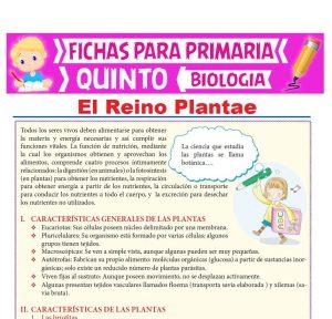 Ficha de El Reino Plantae para Quinto Grado de Primaria